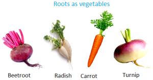 roots-as-vegetables