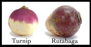 rutabaga n turnip